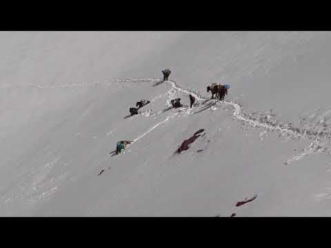 Horses Accident In Ausangate Country (peru)