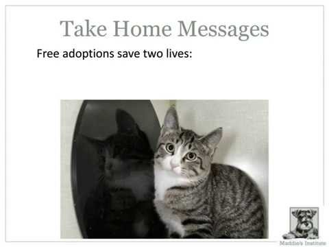 Fears, Facts And Forever Homes: What We Know About Free Pet Adoptions - Webcast
