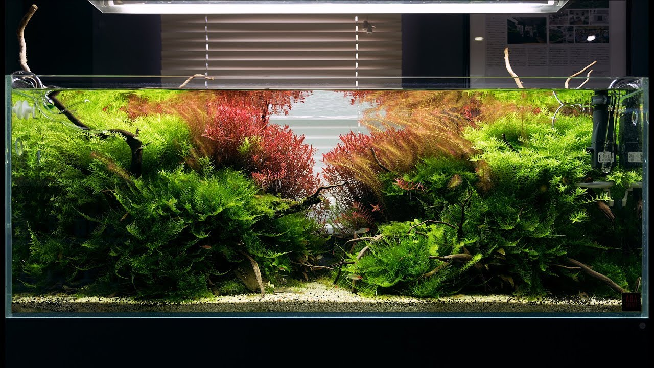 A BEAUTIFUL MATURED AQUASCAPE WITH LIVE AQUARIUM PLANTS ...