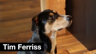 Dog breakfast tips with Molly | Tim Ferriss