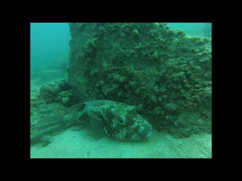 Final PADI Open Water Dive for Delphino and Christina at Sha