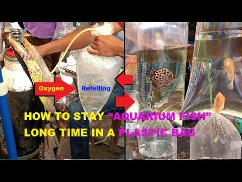 HOW TO STAY AQUARIUM FISH LONG TIME IN A PLASTIC BAG-Oxygen Problem Solution Of Plastic Bag Fish