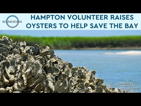 Volunteer in Hampton raises oysters to help clean the Chesapeake Bay
