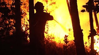 forest fires kill at least 43 in central portugal