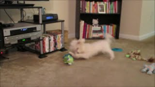 Vlog #443 I Love The Puppy Zoomies! July 9, 2014