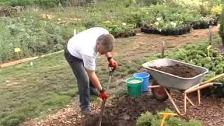Дизайн вашего сада: посадка хвойных растений(, 2013-06-12T13:28:31.000Z)