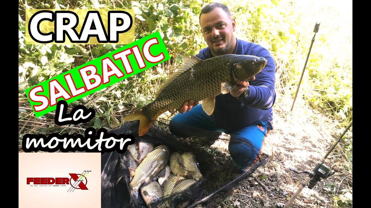 Download Crap salbatic pe Dunare