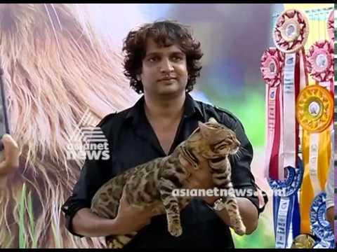 Alliance of Cat Fanciers conducted cat show at Kochi