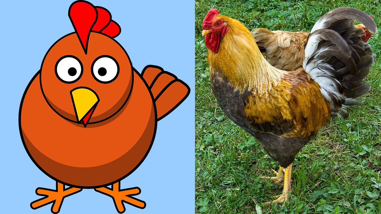 farm animals animal names learn