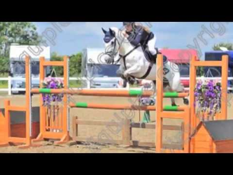 148 Talented BSJA Pony For Sale