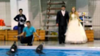 Бракосочетание в дельфинарии