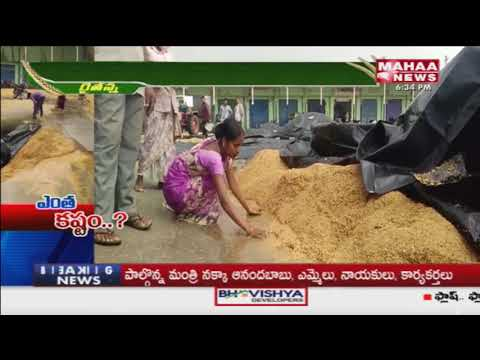 Crops Heavy Loss Because Of Heavy Rains   #MahaaRythuAnna