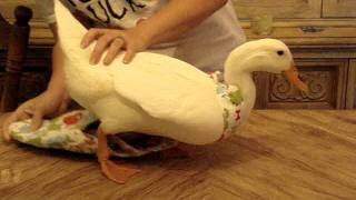 Dino Ducky Diapers: How to dress your duck.