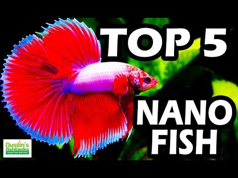 TOP 5 NANO FISH  Small Fish Tank Series NANO Aquarium FISH