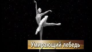 Анастасия Волочкова - Умирающий лебедь, танцует, смотреть видео, русский балет классика(Присоединяйтесь в соц.сетях: Instagram - http://instagram.com/volochkova_art Official website - http://www.volochkova.com/ ..., 2015-10-07T19:37:19.000Z)