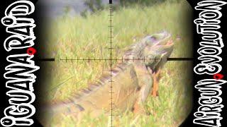 Iguana Pest Control  | South Florida Iguana Invasion