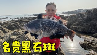 Xiao Zhang catches two big goods, valuable black grouper and big octopus into the bucket