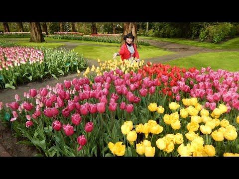Pt C Keukenhof Garden Holland with Songs on Friday 29 April 2016.
