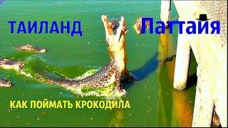 ТАЙЛАНД Крокодиловая ферма в е  КАК ПОЙМАТЬ КРОКОДИЛА НА МЯСО