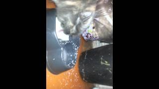 Кошка не умеет пить