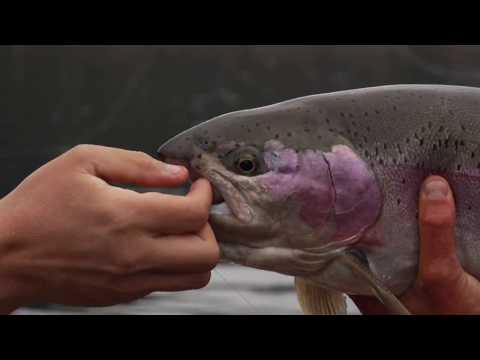Fly Fishing Lakes In BC Canada For Trout