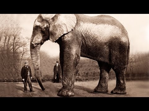 THE BIGGEST ELEPHANT IN THE WORLD