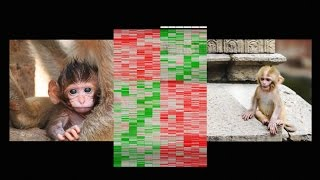 How early life experience is written into DNA   Moshe Szyf