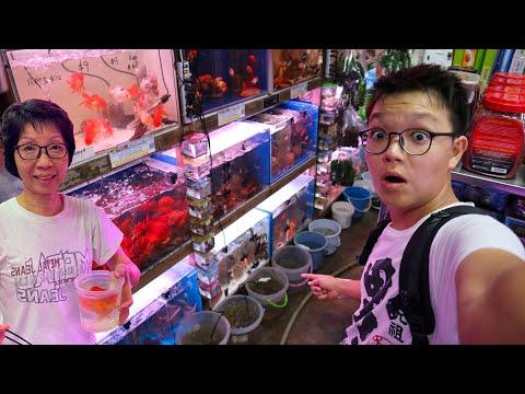 Singapore's Most EPIC & LEGENDARY FISH STORE TOUR - C328 Aquarium