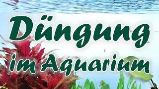 Workshop: Pflanzendüngung im Aquarium