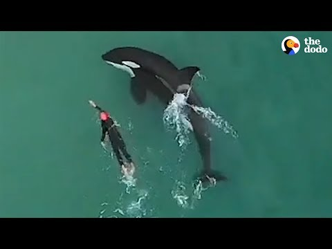 Woman Swimming Gets The Best Surprise | The Dodo