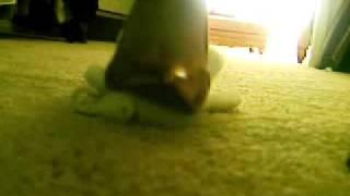 Stomping Stuffed Animal, Heels And Feet