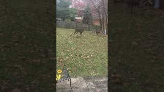 Monster Urban Whitetail Buck in Northern Kentucky (1 of 2)