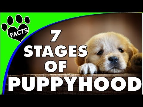 Dog Years: The 7 Stages of Puppy Growth and Development - Dogs 101