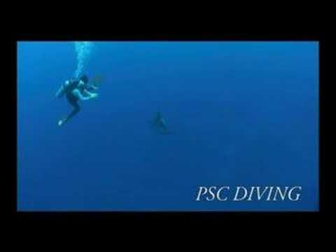 Rangiroa diving (ランギロアダイビング)