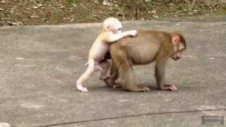 Animals/Amazing moments 4(Приколы с обезьянами,коровами,баранами,акулами,слонами и т.д