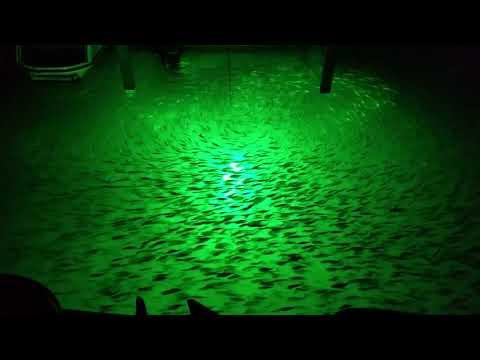 Hydro Glow Fishing Light