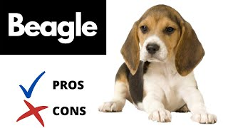 Beagle Pros And Cons | The Good AND The Bad!!