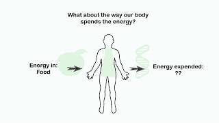 Total Daily Energy Expenditure