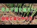 長ネギを植え替えた 【長ネギの栽培方法】 の動画、YouTube動画。