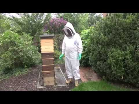 Parks Talley - Killing a Hot Bee Hive