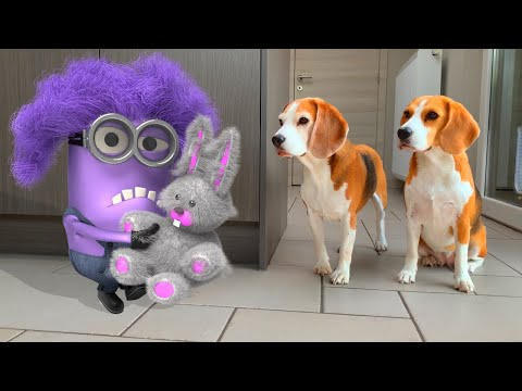 🍌💜DOGS vs PURPLE MINION DAVE IN REAL LIFE 💜🍌 Funny Dogs Louie & Marie