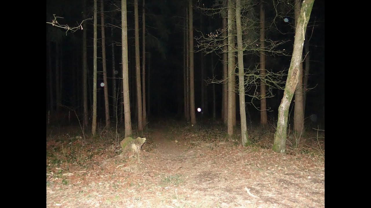 Ghost Hunting Geisterjagt In Wald Rote Augen Im Wald Ghost Eyes