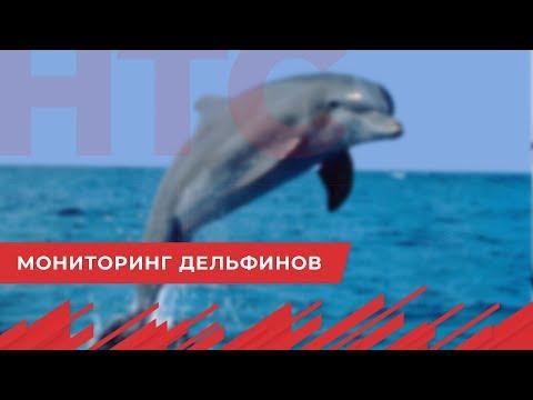НТС Севастополь: Экологи Севастополя хотят наблюдать за дельфинами в Черном море