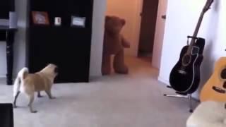 Напугал Собаку что она Обосралась