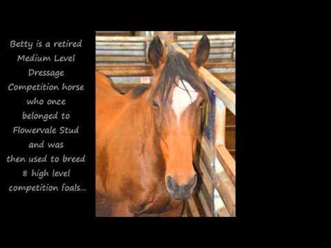 Pakenham Horse Sales
