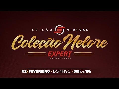 Lote 09   Helga FIV Expert   EXPT 654