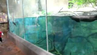 animal otter playing with children in a park San Diego.FLV Thumbnail