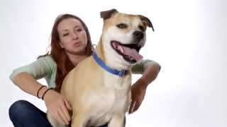 My Lover Kissing My Top Quality Breed Retriever Labrador Pet Dog