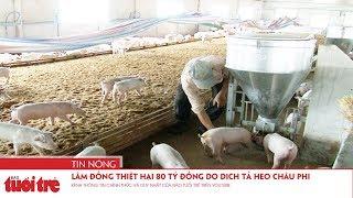 Lâm Đồng thiệt hại 80 tỷ đồng do dịch tả heo châu Phi