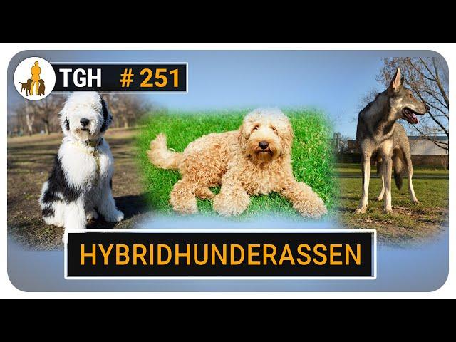 Hybridhunde und Modehunderassen - Fluch oder Segen? Was sagt der Hundetrainer dazu? - TGH 250